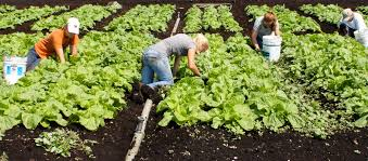 organic farming challenges and prospects Current status of organic farming in india and other countries organic farming is being practised in 100 countries of the world  serious challenges so the use of.